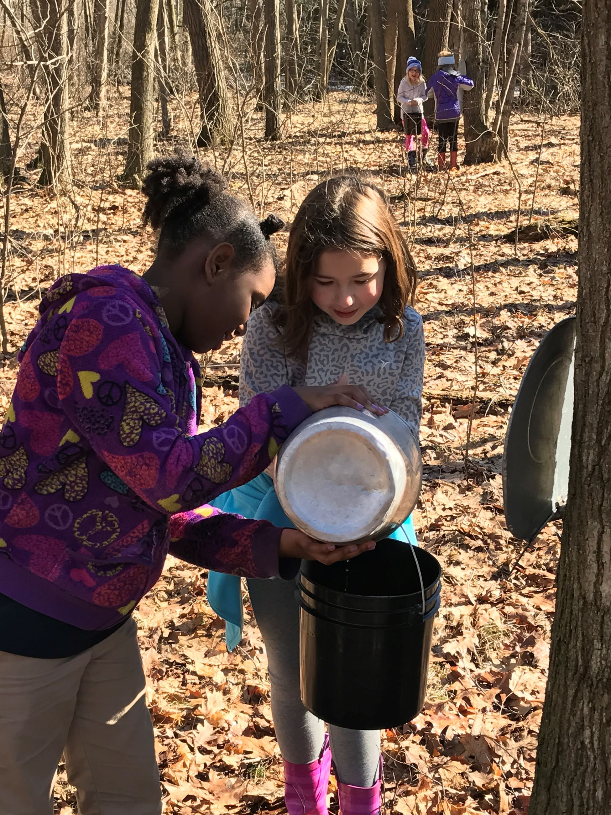Two girls, one girl is pouring sap from a metal Vermont bucket into a plastic bucket which the other