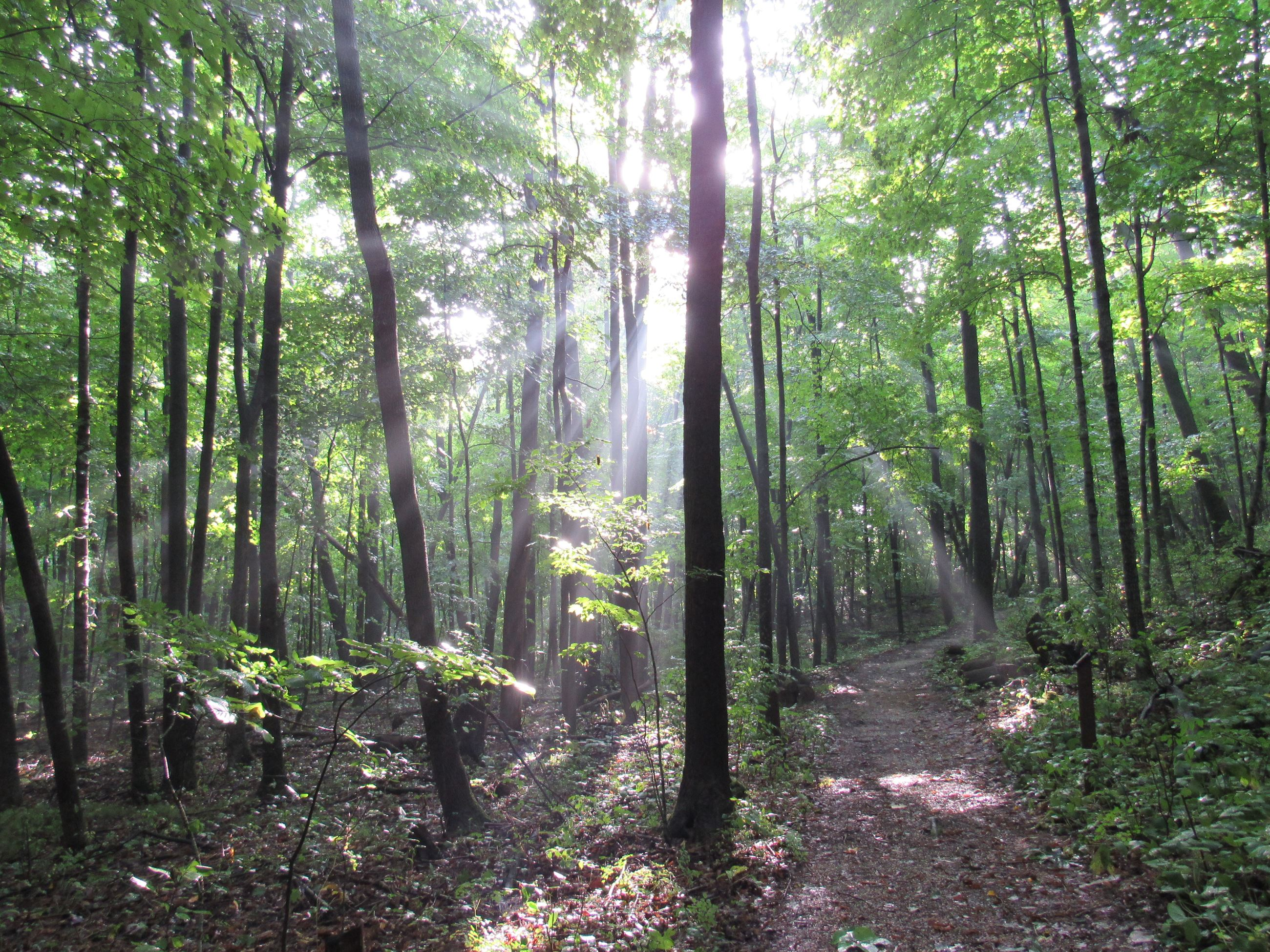 A woodland trail surrounded by trees with sunlight shining through.